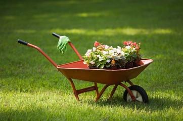 Watford Gardening