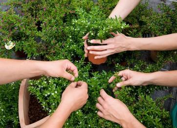 Gardening Watford
